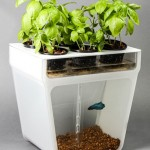 Affordable Home Aquaponics Garden