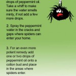 Keep Spiders Away With Peppermint Oil