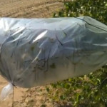 How To Use Transpiration Bags To Gather Water In A Survival Situation