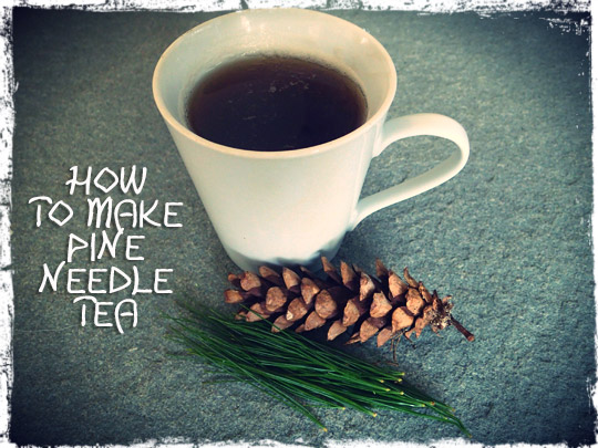 How-To-Pine-Needle-Tea