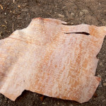 Birch Bark and Its many Uses