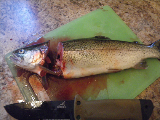 Head removed from rainbow trout