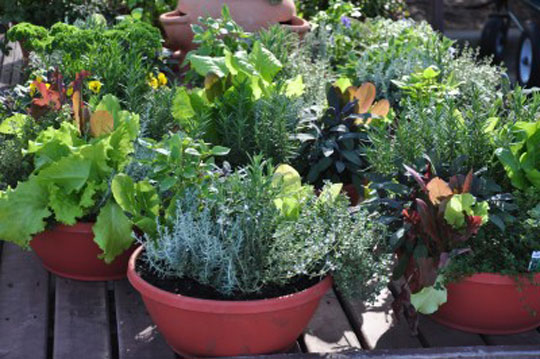 Vegetables Container Gardening