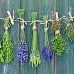 10 Herbs with Antibiotic Properties