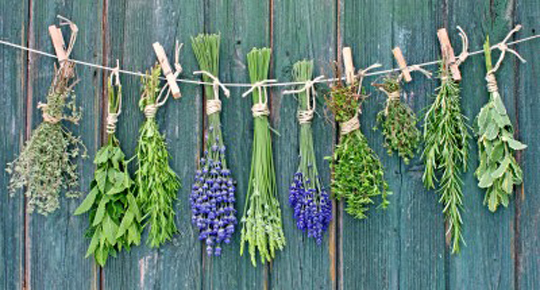 Herbs hanging to dry out