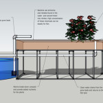 Aquaponics A Survival Food Source