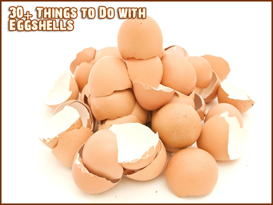 egg shell uses