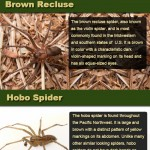 Venomous Spiders of North America Infographic