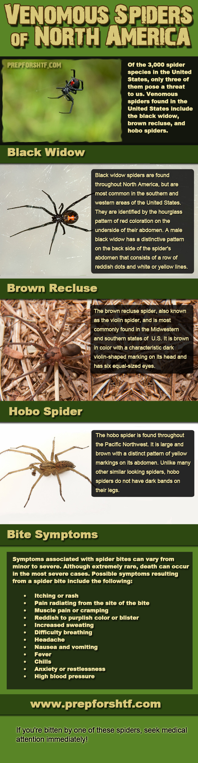 Venomous Spiders of The USA