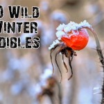 10 Wild Winter Edibles