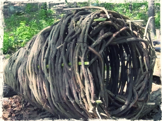 Primitive fish basket trap