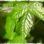 The Best Wilderness Remedy for Poison Ivy