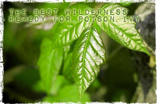 All Natural Poison Oak Remedy