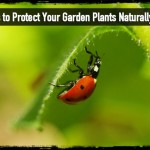 7 Ways to Protect Your Garden Plants Naturally