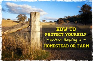 Buying Homestead or Farm