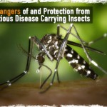 The Dangers of and Protection from Infectious Disease Carrying Insects