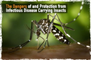 Disease Carrying Insects