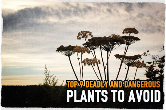 Top 9 Deadly and Dangerous Plants to Avoid