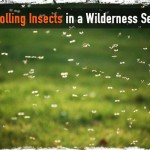 Controlling Insects in a Wilderness Setting