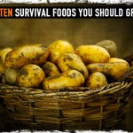 Top Ten Survival Foods You Should Grow