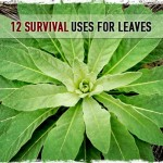 12 Survival Uses for Leaves