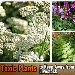 50 Toxic Plants to Keep Away from Your Livestock