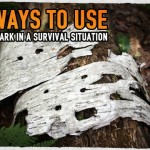 5 Ways to Use Tree Bark in a Survival Situation