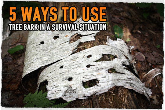 5 ways to use tree bark in a survival situation for Tree trunk uses
