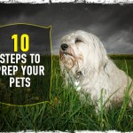 10 Steps to Prep Your Pets