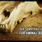 Six Survival Uses for Animal Bones
