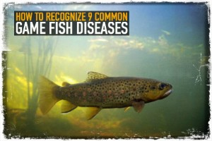 Game Fish Diseases