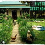 5 Steps to Start Homesteading Right Where You Are