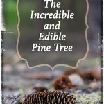 The Incredible and Edible Pine Tree