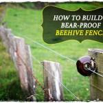How to Build a Bear-Proof Beehive Fence