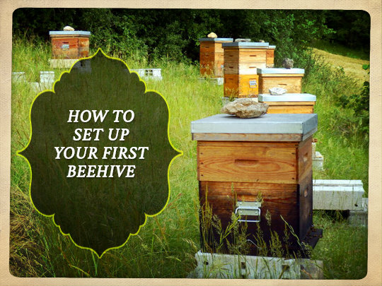 How to Set Up Your First Beehive