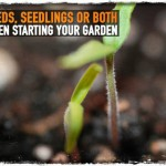 Seeds, Seedlings or Both When Starting Your Garden