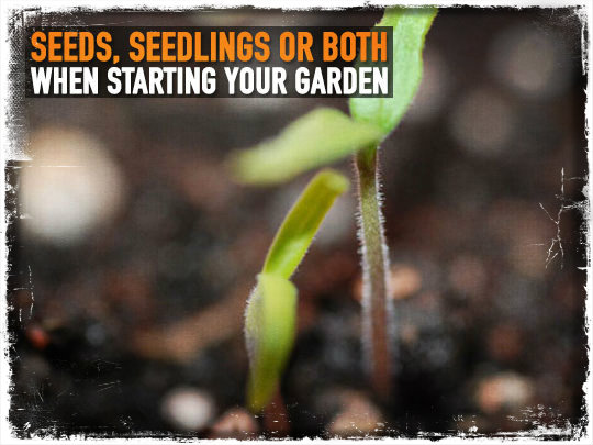 Seeds Seedlings