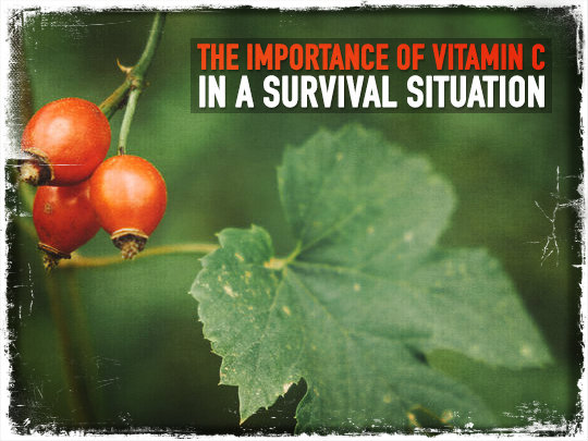 The Importance of Vitamin C in A Survival Situation