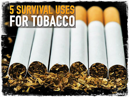 Survival Uses Tobacco