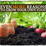 Even More Reasons to Grow Your Own Food