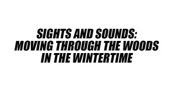 Sights and Sounds: Moving Through the Woods in the Wintertime