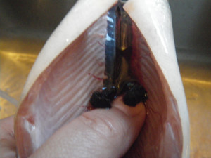 Cleaning trout membrane