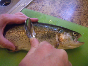 Remove scales from trout