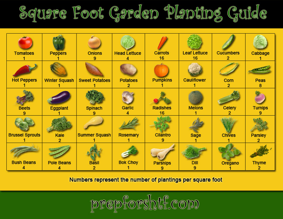 The ultimate guide to companion planting [infographic] alltop viral.