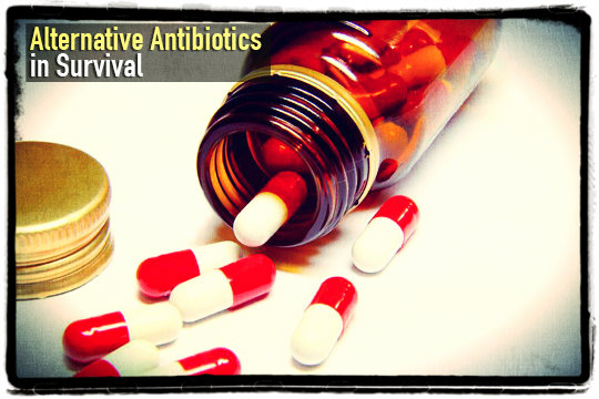 Alternative Antibiotics in Survival