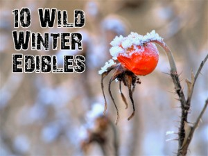 Winter Edibles Rose Hips