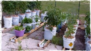 Rain gutter watering system