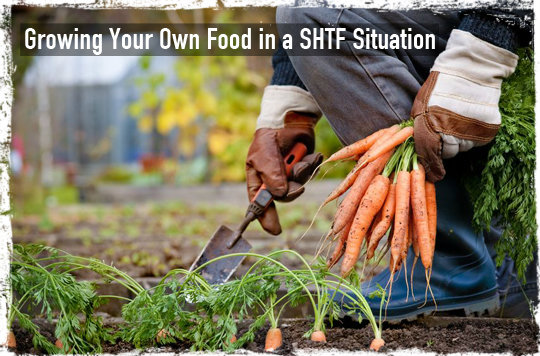 Growing Your Own Food in a SHTF Situation