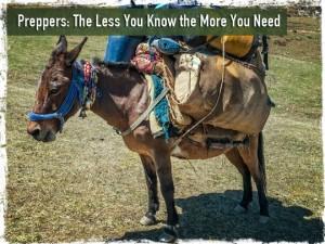 Packed Mule