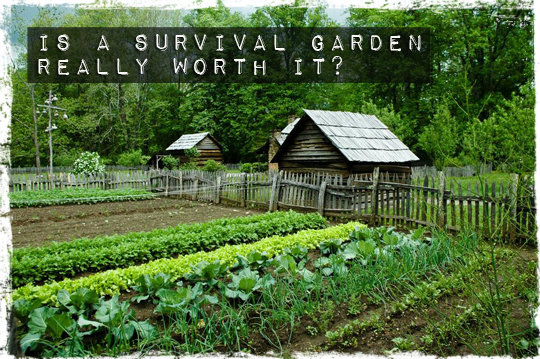 Is a Survival Garden Really Worth It?